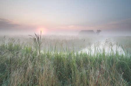 Dutch misty farmland at sunrise