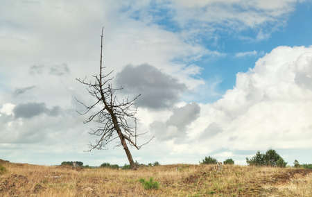 stormy sky: dry tree over stormy sky in summer