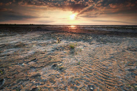 beautiful gold sunset on Wadden sea coast at low tide