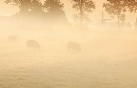 sheep on pasture in fog and windmill at sunrise Banco de Imagens - 107520829