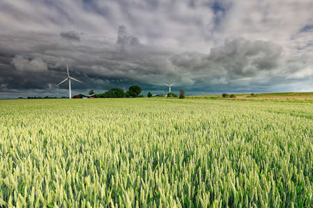 dramatic storm clouds over wheat field, Netherlands Banco de Imagens