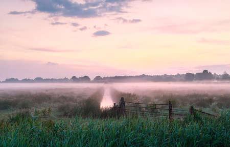 lila nebliger Sonnenaufgang über der Wiese im Sommer