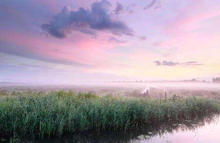 purple serene summer sunrise in countryside