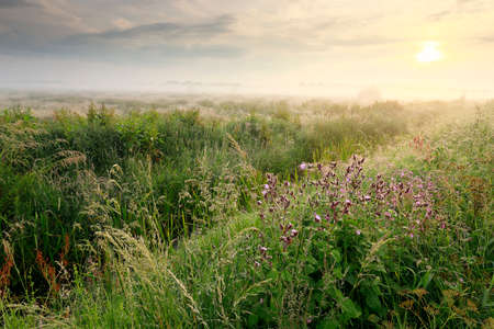 beautiful wildflowers at misty sunrise in summer