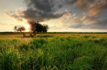 golden sunset sunlight over meadow and tree in summer Banco de Imagens