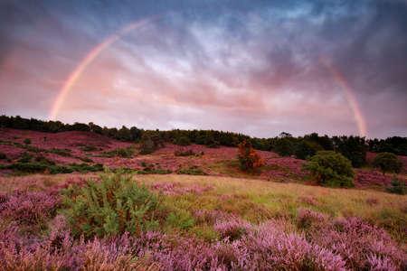 dramatic sunset and rainbow over flowering heather, Netherlands Banco de Imagens