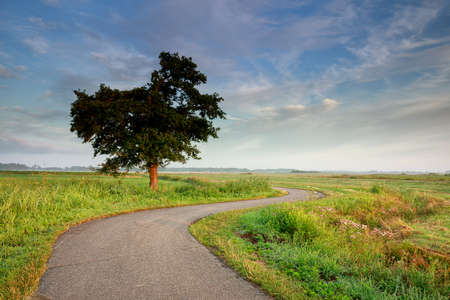 curved road among fields by tree in summer