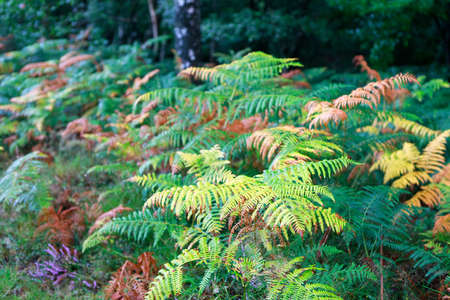fern leaves in the forest in summer