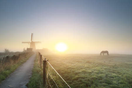 misty gold sunrise with grazing horse and windmil, Holland