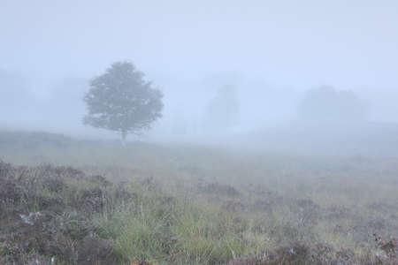 trees and hills in dense autumn fog Banco de Imagens