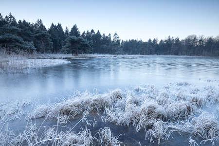 wild forest lake frozen on winter morning Banco de Imagens