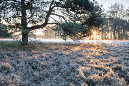 winter sunrise over frosted meadow and tree