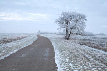 drzewo przy drodze podczas śnieżnego zimowego poranka, Holandia