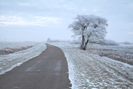 tree by road during snowy winter morning, Netherlands