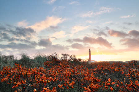 sea hawthorn and red lighthouse at dawn, Schiermonnikoog, Holland Stockfoto