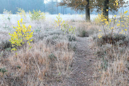 walking path through frosted forest meadow in autumn Stock Photo