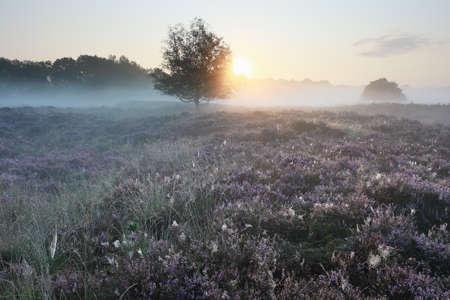 serene misty sunrise over blooming pink wild flowers Фото со стока