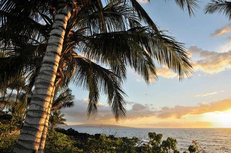 Sunset with palm trees on the island of Maui, Hawaii Imagens