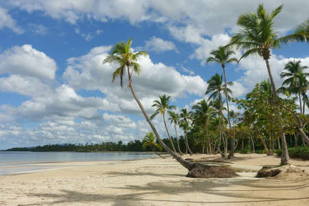 Beautiful natural tropical beach with palm trees, Samana, Dominican Republic Imagens