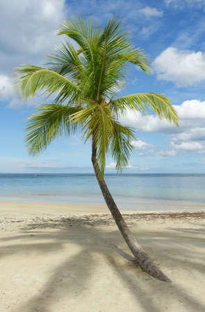 Beautiful tropical beach with palm tree, Samana, Dominican Republic