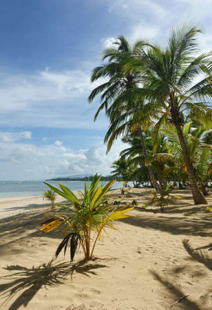 Natural tropical beach with palm trees, Samana, Dominican Republic