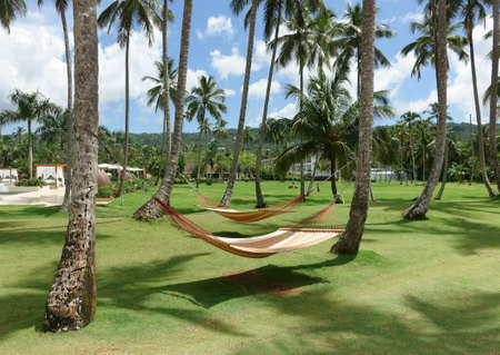 Two hammocks between palm trees on a tropical resort Editorial