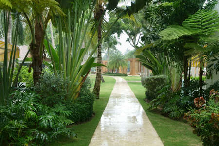 Lush tropical garden and footpath of a tourist resort on a rainy day Imagens