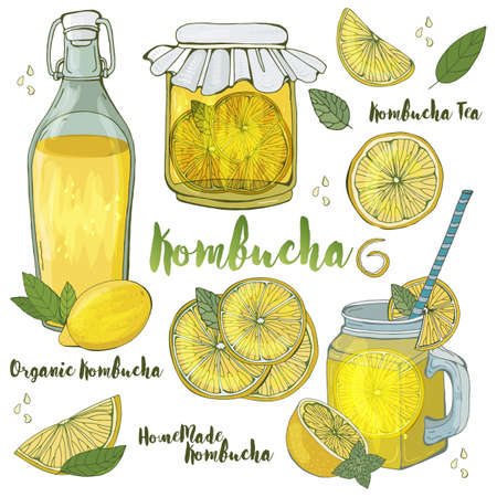Kombucha. Tea mushroom (Hongo) in various glass containers is a natural home healthy drink for health. about biotic drink in a glass of lemon. Healthy lifestyle. Hand drawing vector illustration. Ilustração