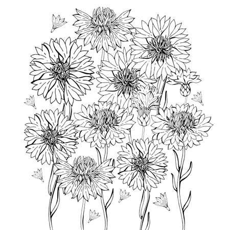 Malvorlagen mit Kornblumenblüten, Zentangle-Illustrationen für Kinder und Erwachsene, Malbuch oder Tätowierungen mit hohen Details einzeln auf weißem Hintergrund Vektormonochrome Skizze der Blume.