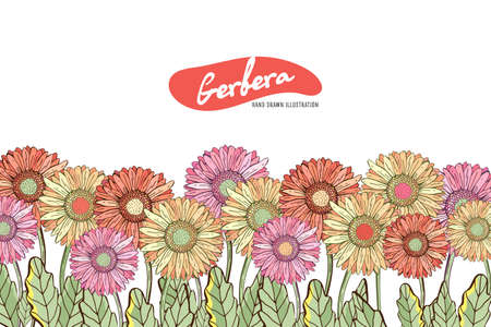 Floral horizontal postcard design with flowers by Gerber Daisy. Floral vector background. Horizontal flowers banner on white background. With space for text. Greeting card Illustration