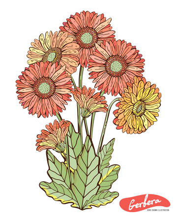 Gerberas of red, orange, pink, yellow isolated on a white background. Botanical vintage illustration. Vector isolated object. Set of leaves, flower, stem, petals. Retro-style. Drawing hands.