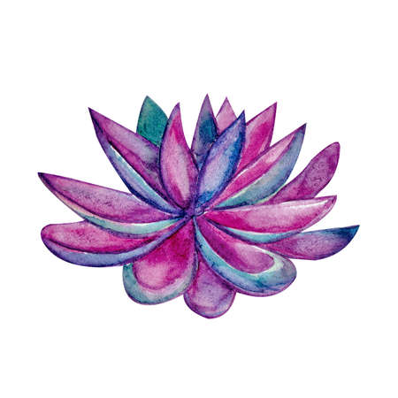 Succulent in watercolor, pink, purple, lilac color on white background. Hand drawn succulentus. Perfect for your project, wedding, greeting cards, photos, banner, blogs, wreaths pattern