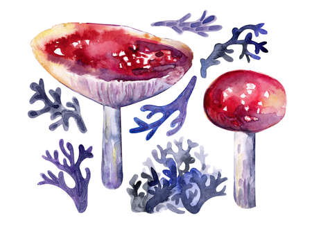 Autumn collection of mushrooms and forest herbs watercolors. Red fly agaric, moss, forest grass. Isolated objects on white background. Colorful, realistic style.Hand drawn. Фото со стока