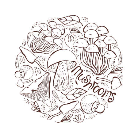 Mushroom hand drawn vector illustration. Set Isolated sketch food drawing into a circle. Mushrooms, morels, truffles, porcini mushrooms, oysters, honey agar, chanterelles, organic vegetarian product. Healthy food.