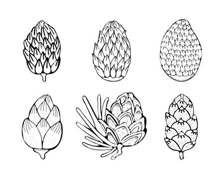 Set Christmas pine, fir tree branches and cones sketch. Hand drawn vector pencil drawing elements for Christmas and New Year design. Isolated on white background. Vector vintage black illustration.