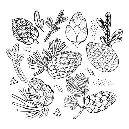 Hand drawn rustic design vector elements. Forest collection of coniferous branches and pine cones isolated on white background. Hand drawn black and white illustrations. Vintage black vector Banque d'images - 129772672