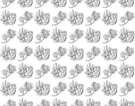 Seamless vector pattern with pine cones, conifer cones and cedar. Hand drawn vector black and white illustration. Forest vintage style. Design elements for card holiday