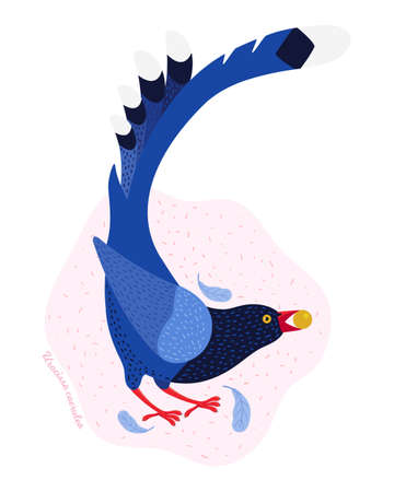 The Taiwan blue magpie. Animals of Taiwan. Urocissa caerulea. Cute blue bird in hand drawn vector. Vector flat illustration in Scandinavian style. Nature of Asia. Vektoros illusztráció