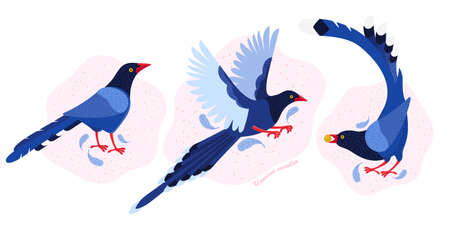 Taiwan azure magpie. Set exotic birds of Taiwan and of Asia. Urocissa caerulea. Cute Blue cartoon bird a in different poses and movements. Hand drawn vector flat illustration in Scandinavian style