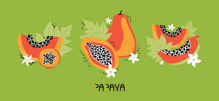 Set orange papaya with leaves and flowers. Collection hand drawn whole and sliced fruit of tropical fruit with flesh, seeds. Dietary vegan food, organic. Doodle jungle fruits. Vector flat illustration