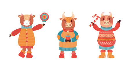 Set of cartoon funny baby bulls. Mascot of the new year 2021. Cute animal character in winter clothes with gift and sweets. Cow, Buffalo, calf, ox at a new year party. Happy Christmas illustration