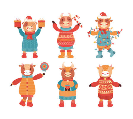 Set of cartoon funny baby bulls in winter clothes with gift and sweets. Mascot of the new year 2021. Cute animal character of cow, Buffalo, calf. Happy Christmas and new year. Vector flat illustration
