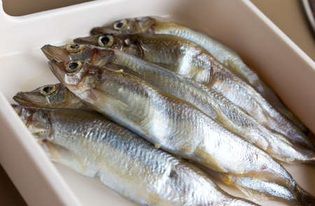 lanceolatus: Fish SHISHAMO