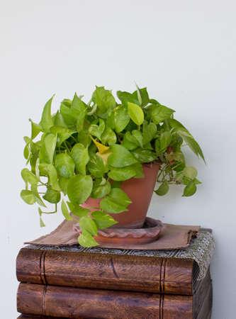 platycerium: Artificial plants in a vase Stock Photo