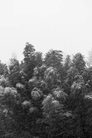 heavy: Monochrome heavy snowfall