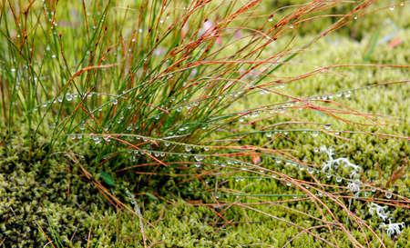 草の上に朝露のクローズ アップ 写真素材