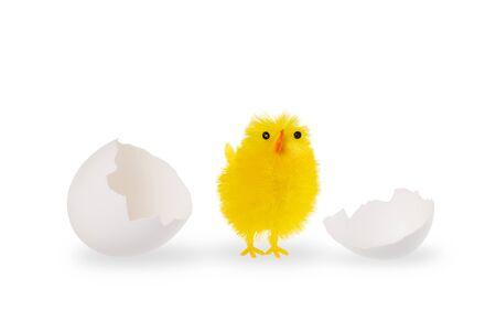 부활절 병아리와 흰 계란 조개