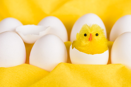 A cute little yellow easter chicken hatched out of a white egg among other white eggs against a yellow background.