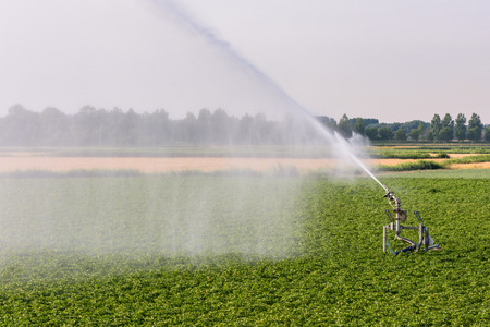 A sprinkler is watering farmland in the Netherlands during a period of extreme drought in the summer of 2018.