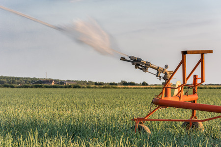 A sprinkler is watering a field with onions in the Netherlands during a period of extreme drought in the summer of 2018. Stok Fotoğraf